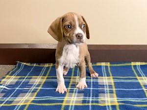 Dogs & Puppies for Sale - Petland Mason in Cincinnati, Ohio