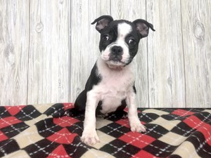 Puppies for Sale - Visit Petland Hilliard, Franklin County