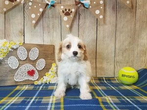 Dogs & Puppies for Sale - Petland Strongsville, Ohio
