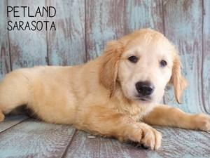 Dogs and Puppies for Sale – Petland Sarasota, Florida Pet Store