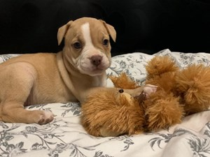 Available Puppies – Petland Florida
