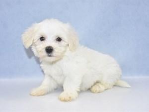 Puppies for Sale   Petland Jacksonville   Jacksonville