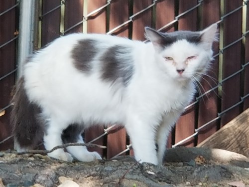 Found Pet #54601