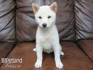 Dogs & Puppies for Sale - Petland Frisco, Texas Pet Store