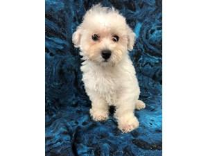 Dogs & Puppies for Sale - Visit Petland Pensacola, Florida!