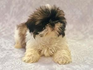 Petland Bradenton, Florida - Buy Puppies, Pet Supplies & Food