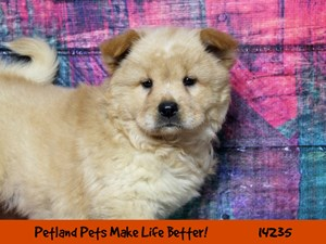 Dogs & Puppies for Sale - Petland Chicago Ridge, Illinois