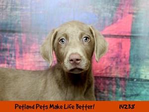 Dogs & Puppies for Sale - Petland Chicago Ridge, Illinois