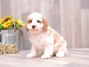 Available Puppies - Fetch
