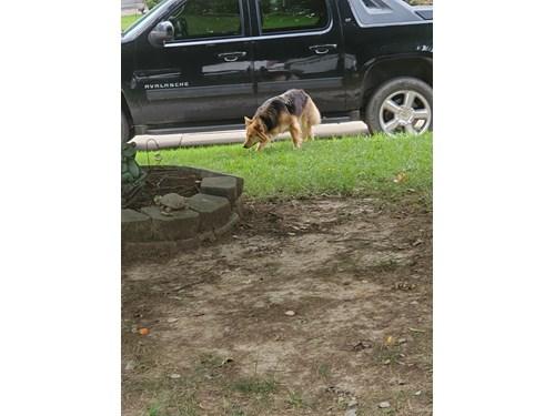Found Pet #54636