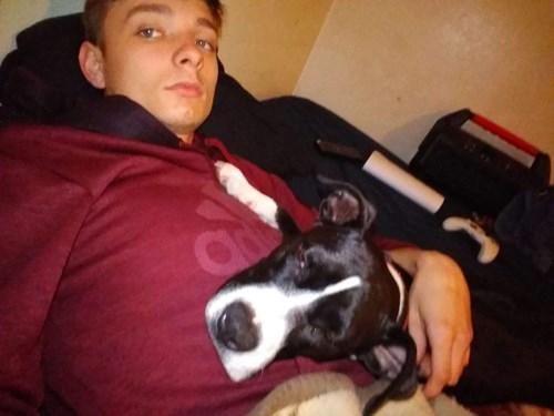 Lost Pet #106393