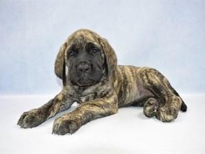 Puppies for Sale | Petland Jacksonville | Jacksonville