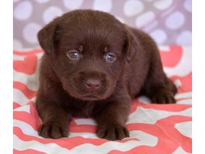 Dogs and Puppies For Sale - Petland Waterford Lakes Orlando