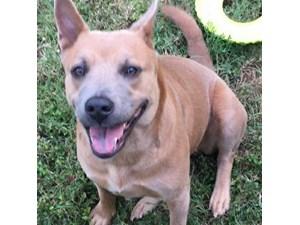 Lost Pets Near San Antonio, TX