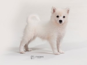 Dogs & Puppies For Sale - Visit Petland Topeka, Kansas Today!