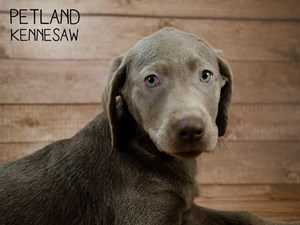 Dogs & Puppies For Sale - Petland Kennesaw, GA