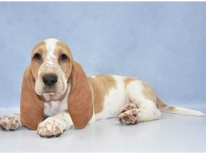 Dogs and Puppies for Sale – Petland Las Vegas, Nevada