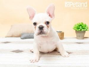 Available Puppies – Petland Florida