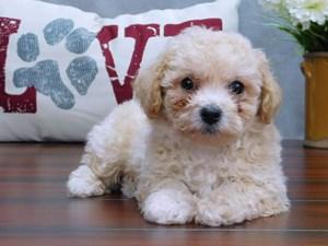 Puppies for Sale | Petland Lewis Center | Columbus Ohio