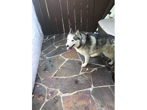 Found Pet #54866