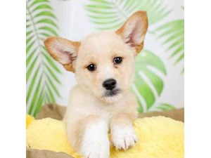 Poo-Shi-DOG-Male--2472916