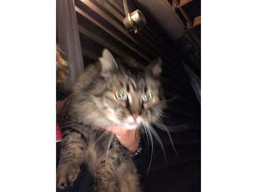 Found Pet #55161