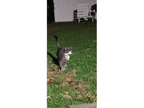 Found Pet #55184