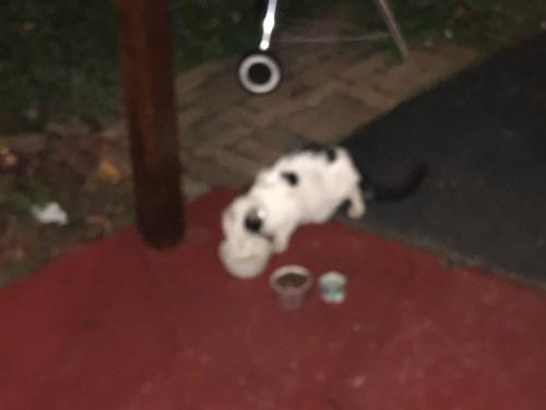 Found Pet #55405