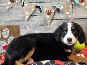 Dogs Puppies For Sale Petland Strongsville Ohio