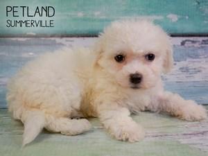 Dogs & Puppies For Sale - Petland Summerville, South Carolina