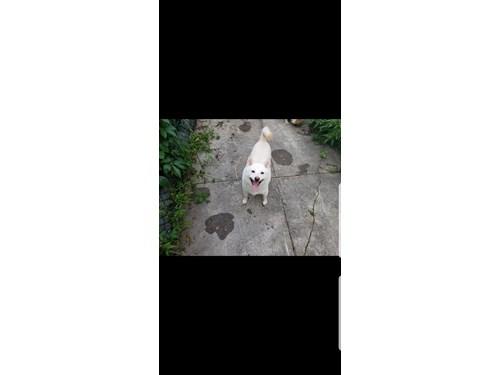 Lost Pet #110585