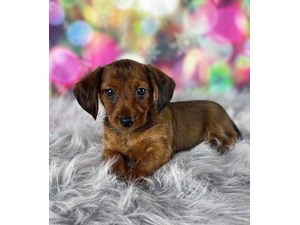 Petland Bradenton Florida Buy Puppies Pet Supplies Food