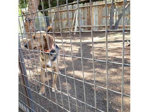 Found Pet #56103