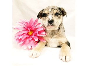 Puppies For Sale Petland Janesville