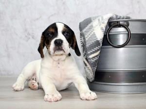 Puppies For Sale Petland Lewis Center Columbus Ohio