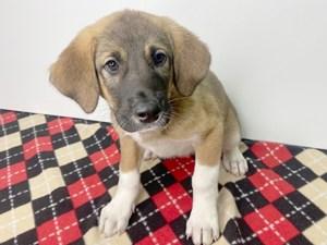 Puppies For Sale Visit Petland Hilliard Franklin County Ohio