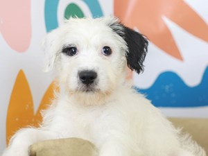 Chonzer-DOG-Female--