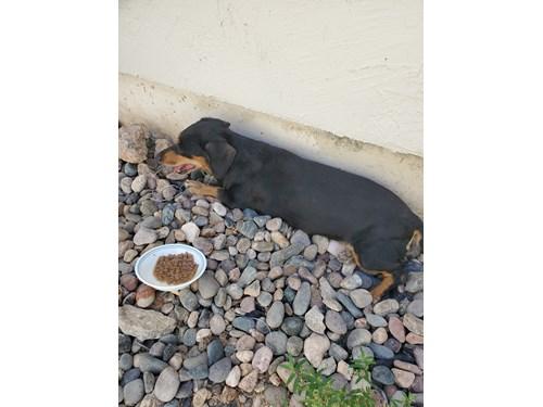 Found Pet #57795
