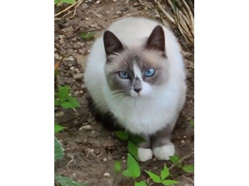 Found Pet #57798