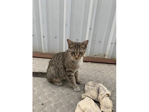 Found Pet #57803