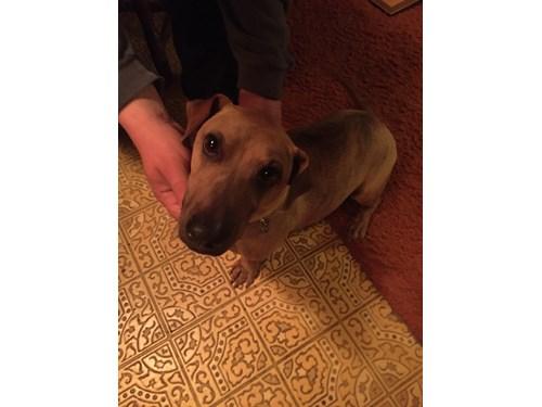 Found Pet #57810