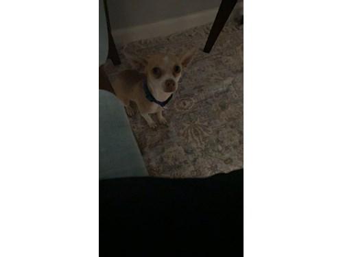 Found Pet #57817