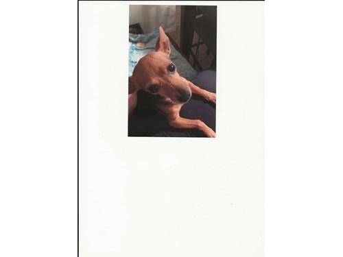 Lost Pet #116907
