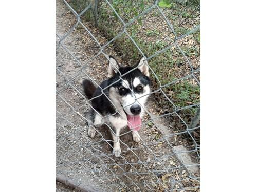 Found Pet #57868