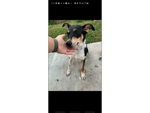 Found Pet #57875