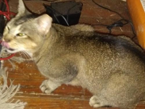 Found Pet #58327