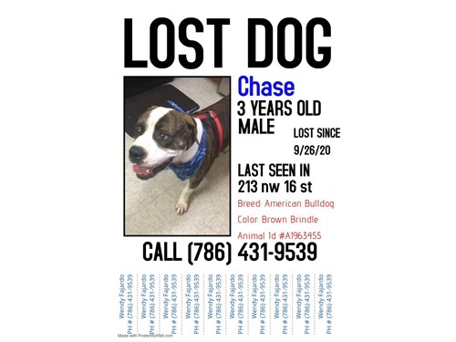 Found Pet #58344