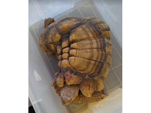 Found Pet #58347