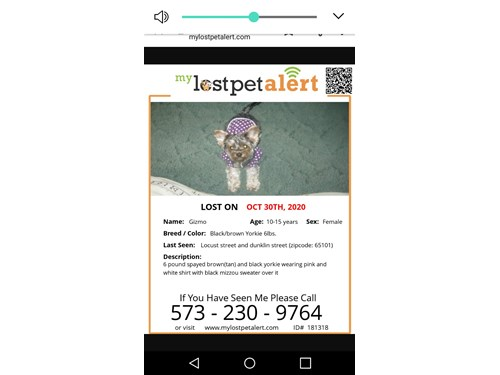 Lost Pet #119663