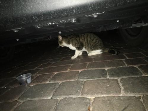 Found Pet #58854